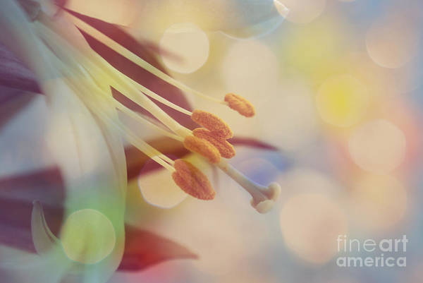 Bokeh Poster featuring the photograph Joyfulness by Aimelle