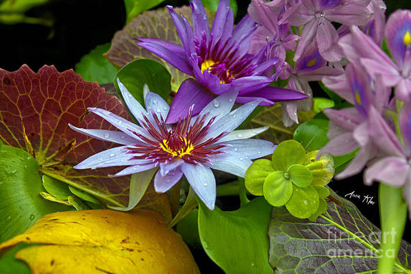Cluster Of Waterlilies Poster featuring the photograph Lilies No. 32 by Anne Klar