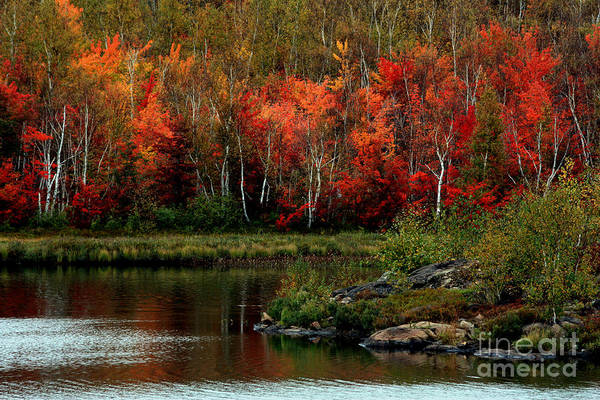 Autumn Poster featuring the photograph Autumn In Canada 2 by Marjorie Imbeau