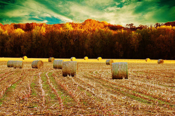 Hay Poster featuring the photograph Bales Of Autumn by Bill Tiepelman