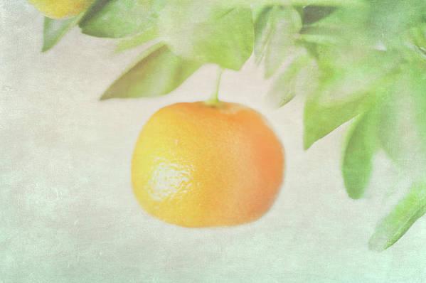 Horizontal Poster featuring the photograph Calamondin Miniature Orange by Peter Chadwick LRPS