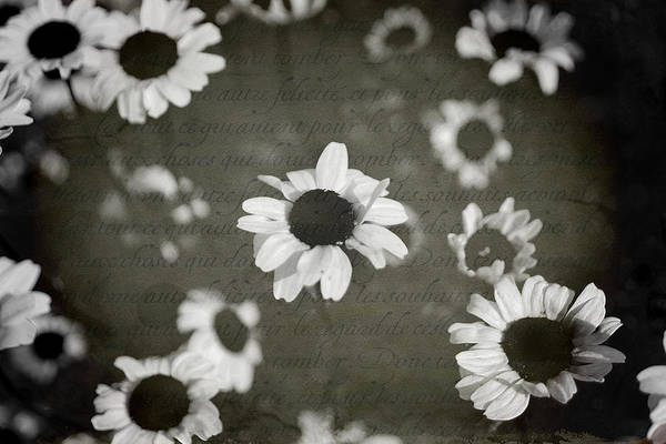 Flowers Poster featuring the photograph Even In Darker Days by Laurie Search