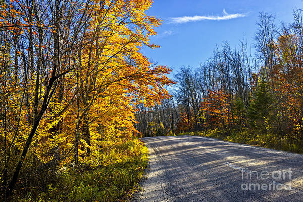 Road Poster featuring the photograph Fall Forest Road by Elena Elisseeva