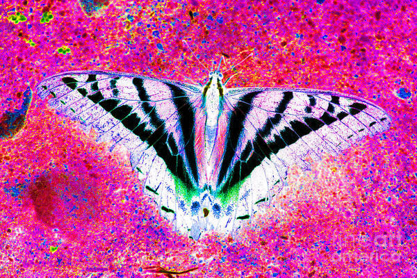 Butterfly Poster featuring the photograph Ghost Butterfly by Nick Gustafson