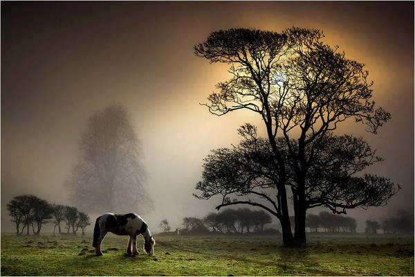 Horizontal Poster featuring the photograph Horse Grazing In Field by Land and Light
