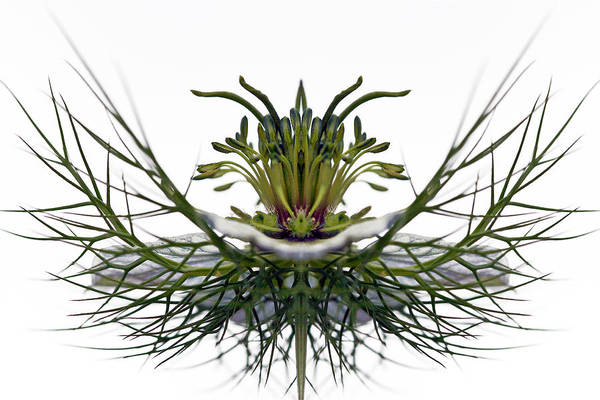 Creative Manipulation Poster featuring the photograph Love In A Mist by Jean Noren