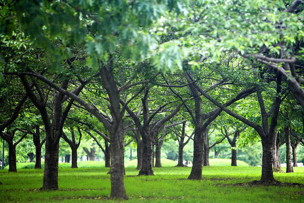 Horizontal Poster featuring the photograph Low Trees In Flushing Meadows-corona Park by Ryan McVay