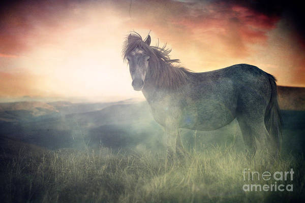 Horse Poster featuring the digital art Misty Sunset by Lee-Anne Rafferty-Evans