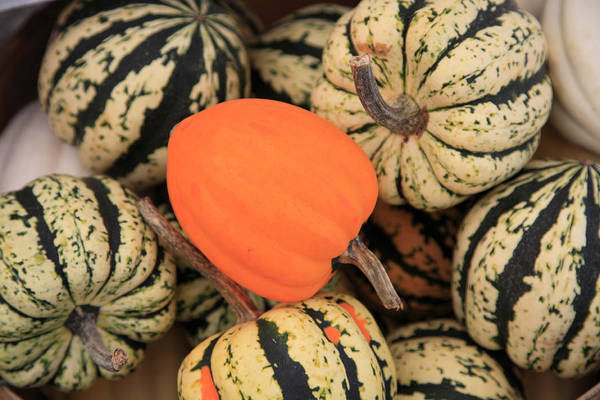 Horizontal Poster featuring the photograph Organic Pumpkins by Wendy Connett