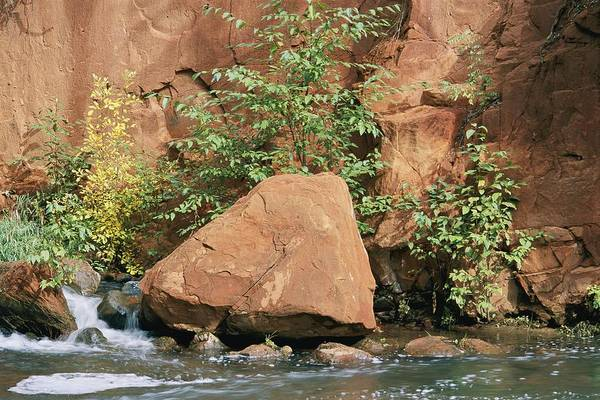 Oak Creek Canyon Poster featuring the photograph Red Rocks, Fall Colors And Creek, Oak by Rich Reid