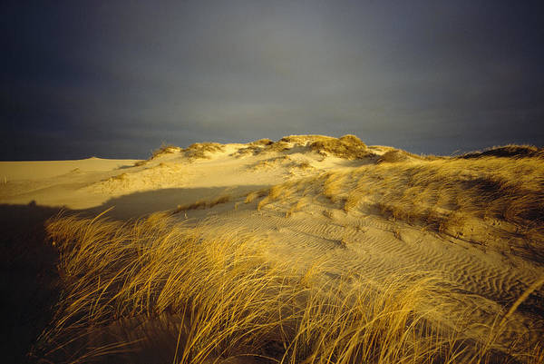 Day Poster featuring the photograph Sand Dunes And Beach Grass In Golden by James P. Blair