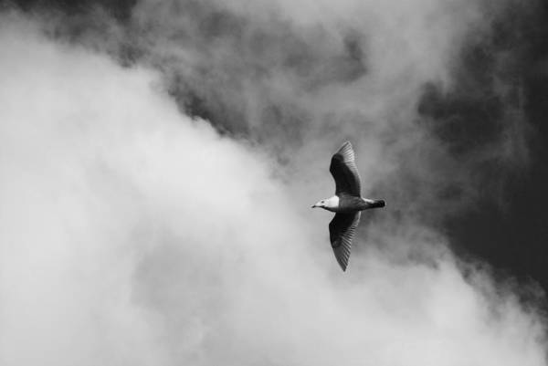 Puget Poster featuring the photograph Seagull In The Clouds by Twenty Two North Photography
