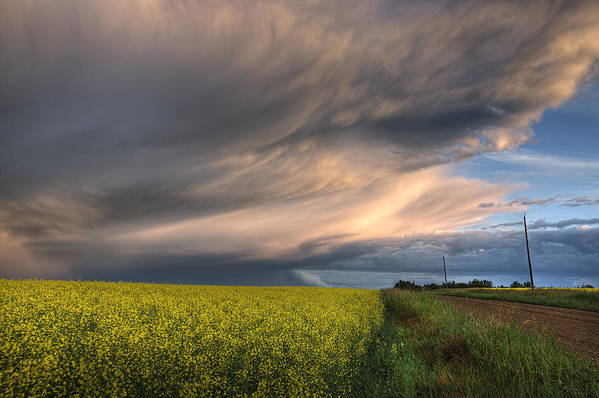 Alberta Poster featuring the photograph Summer Evening Storm Blowing Over Ripe by Dan Jurak