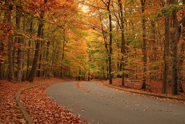 Trees Of Autumn Poster featuring the photograph Trees Of Autumn - Holmdel Park by Angie Tirado