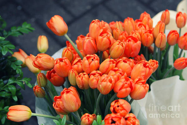 Tulip Poster featuring the photograph Tulips by Leslie Leda