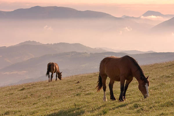 Horizontal Poster featuring the photograph Two Horses Grazing On Mountain Top In Early Mornin by Christiana Stawski