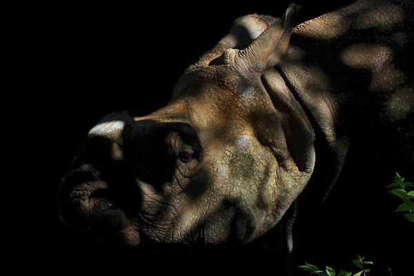 Rhino Poster featuring the photograph Vanishing Into The Darkness by Anthony Wilder