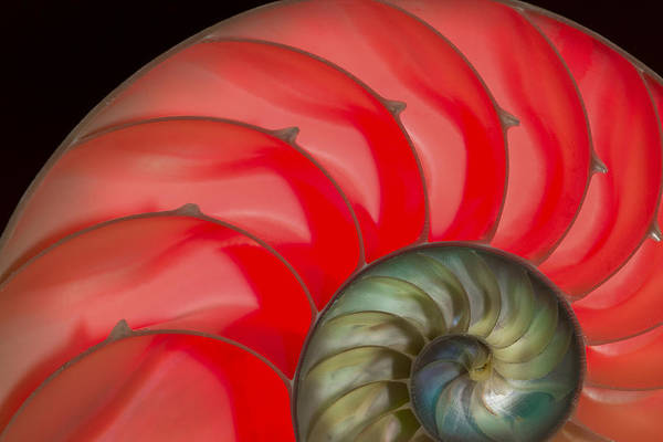 Jean Noren Poster featuring the photograph Nautilus by Jean Noren