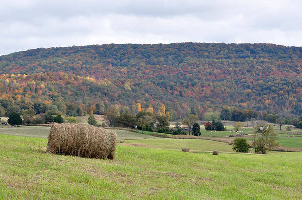 Landscapes Poster featuring the photograph Autumn Bales by Jan Amiss Photography
