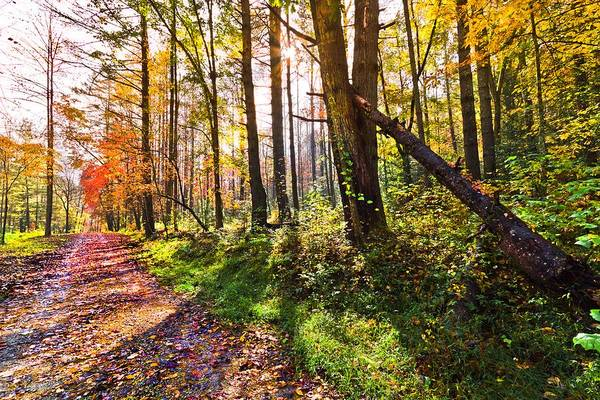 Appalachia Poster featuring the photograph Autumn Trail by Debra and Dave Vanderlaan