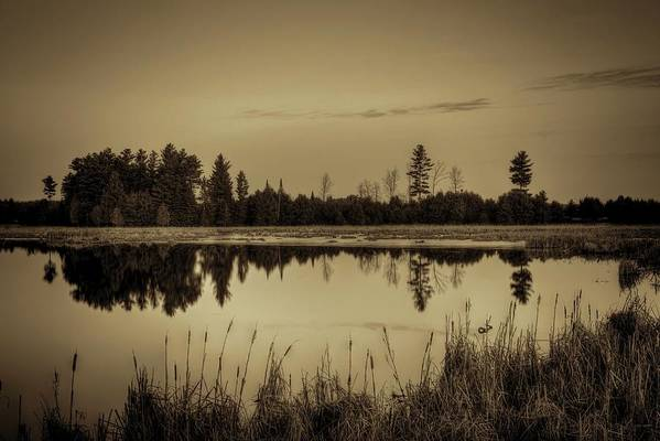 Dale Kauzlaric Poster featuring the photograph Bentley Pond Pines In Sepia by Dale Kauzlaric