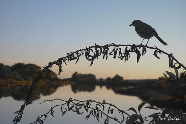 Pond Poster featuring the photograph Bird Song At Last Light by Dave Gordon