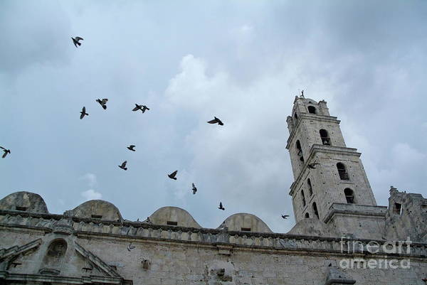 Animal Poster featuring the photograph Birds Flying Above The Basilica And The Monastery Of Saint Francis Of Assisi by Sami Sarkis