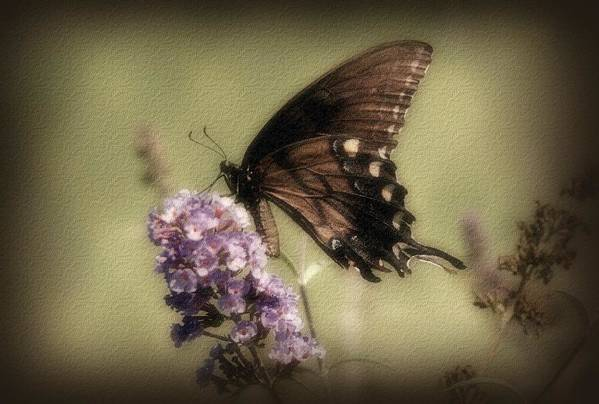 Butterfly Poster featuring the photograph Brown And Beautiful by Sandy Keeton