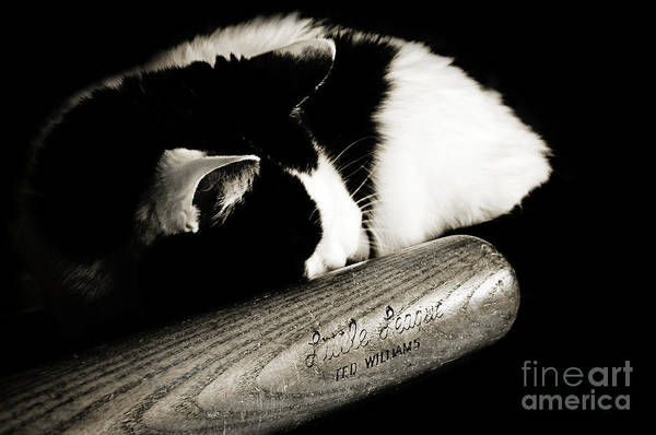 Fine Art Cat Poster featuring the photograph Cat And Bat by Andee Design