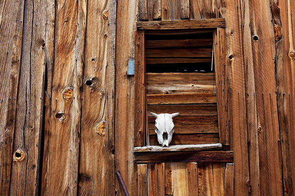 Cow Skull Poster featuring the photograph Cow Skull In Wooden Window by Garry Gay