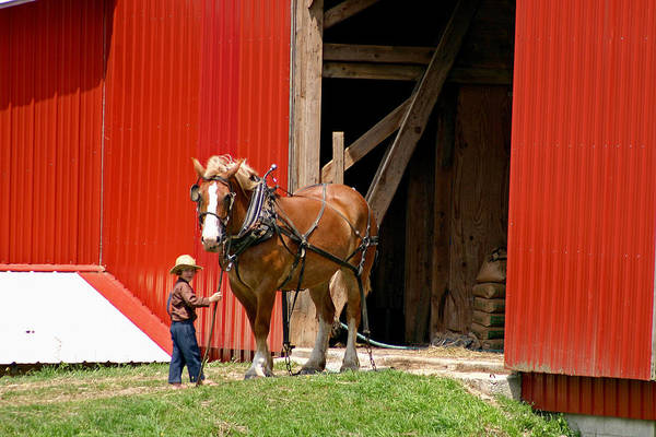 Amish Poster featuring the photograph David And Goliath Number Two by Brian M Lumley