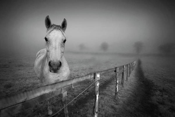Horizontal Poster featuring the photograph Equine Fog by Taken with passion