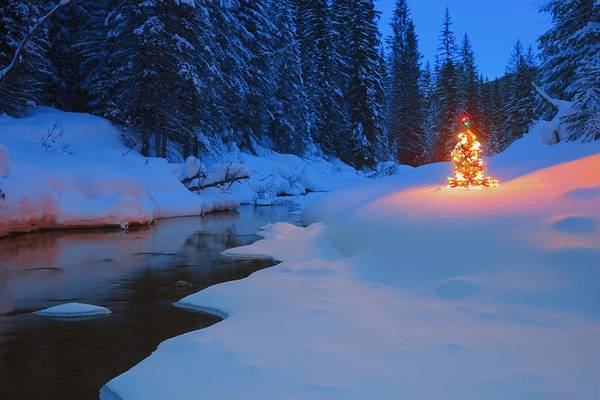 Christmas Decoration Poster featuring the photograph Glowing Christmas Tree By Mountain by Carson Ganci