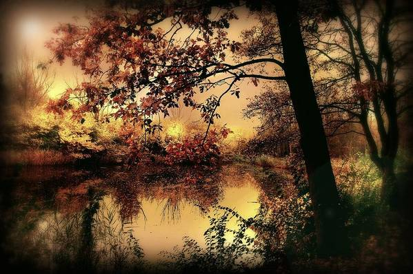 Autumn Poster featuring the photograph In Dreams by Jacky Gerritsen