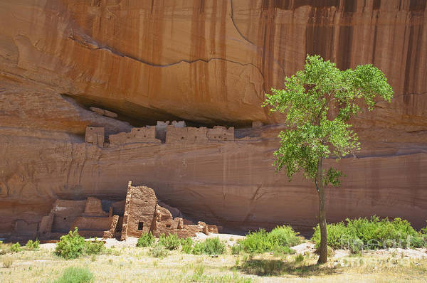 Anasazi Poster featuring the photograph Indian Cliff Dwellings by Thom Gourley/Flatbread Images, LLC
