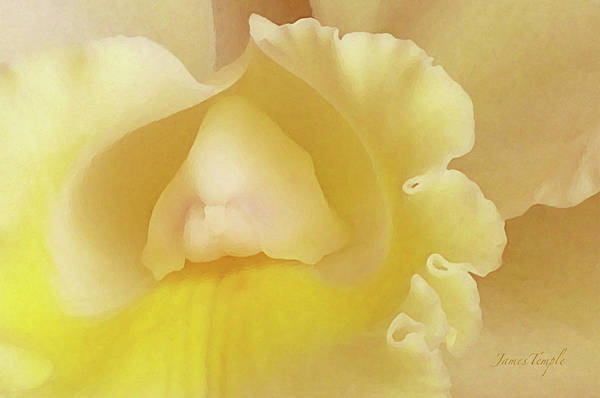 Orchid Poster featuring the photograph Love by James Temple