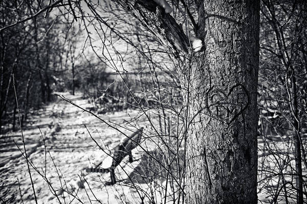 Cj Schmit Poster featuring the photograph Love On A Tree by CJ Schmit