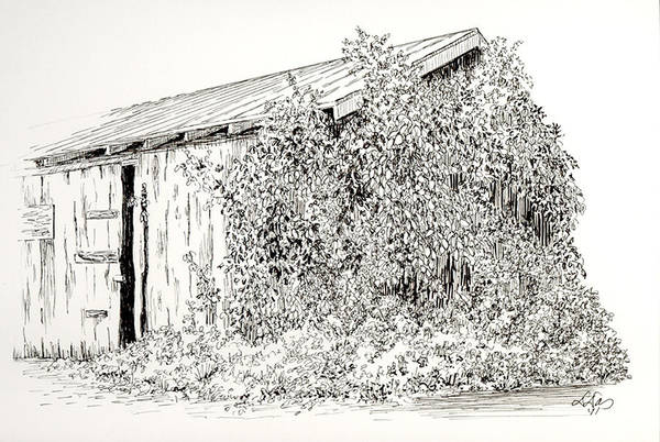 Nature Poster featuring the drawing Old Shed by Deborah Dallinga