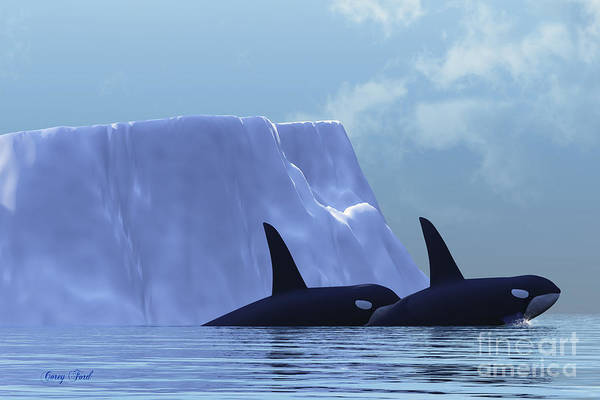 Killer Whale Poster featuring the painting Orca by Corey Ford
