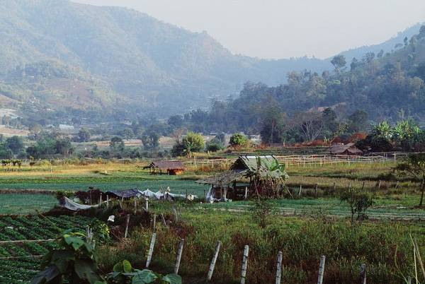 Agriculture Poster featuring the photograph Rural Scene Near Chiang Mai, Thailand by Bilderbuch