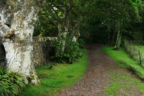 Scotland Poster featuring the photograph Shady Lane by Warren Home Decor