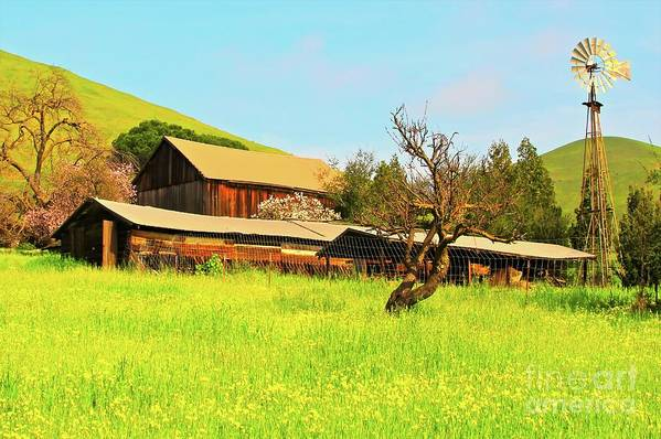Farm Poster featuring the photograph Springtime Barn San Francisco Bay by Gus McCrea