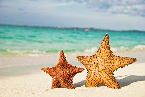 Horizontal Poster featuring the photograph Starfish On Tropical Caribbean Beach by Mehmed Zelkovic