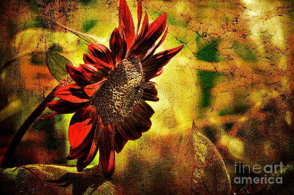Sunflower Poster featuring the photograph Sunflower by Lois Bryan