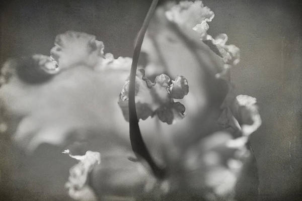 Flower Poster featuring the photograph Tenderness by Laurie Search