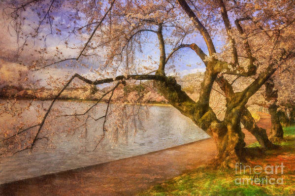 Trees Poster featuring the photograph The Cherry Blossom Festival by Lois Bryan