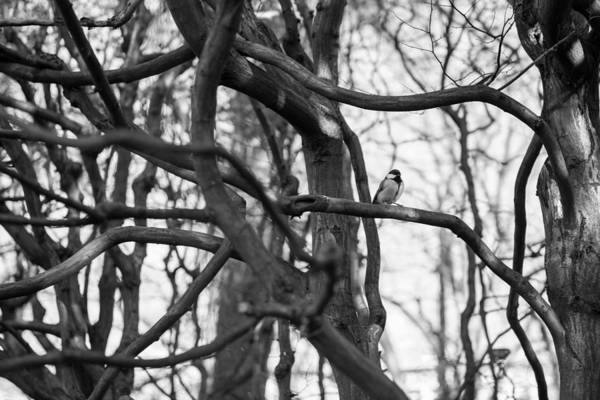 Tit Poster featuring the photograph Tit Bird Perching On Tree by Focus Fotos