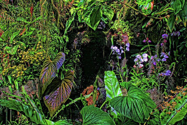 Tropical Flowers Poster featuring the photograph Tropical Rainforest by HH Photography of Florida