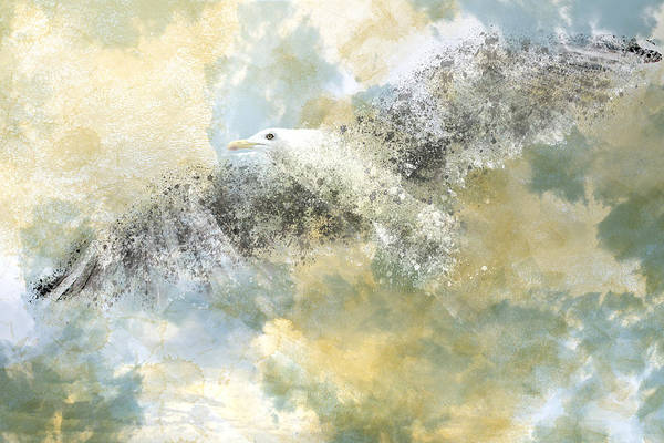 Decorative Poster featuring the photograph Vanishing Seagull by Melanie Viola