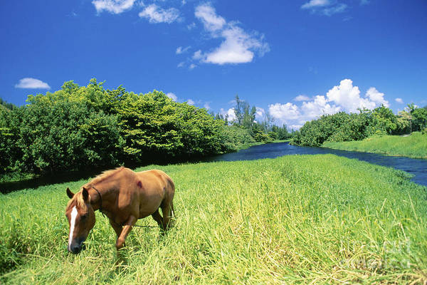 Animal Art Poster featuring the photograph Wainiha Valley by Peter French - Printscapes